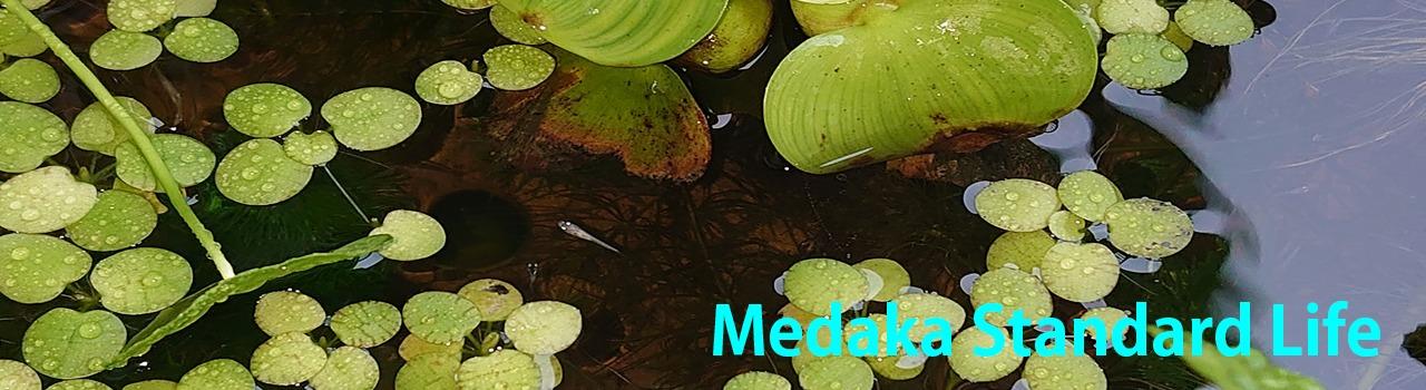 Medaka Standard Life